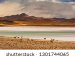 animals grazing on the shores... | Shutterstock . vector #1301744065