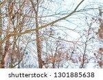 blue tit perching on a branch  | Shutterstock . vector #1301885638