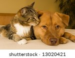 Stock photo cat and dog resting together on bed 13020421