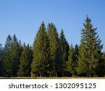 forest landscape in spring... | Shutterstock . vector #1302095125