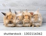 Stock photo group of lovely bunny easter rabbits on wooden background beautiful lovely pets 1302116362