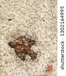 dead finch on sidewalk.  | Shutterstock . vector #1302164995