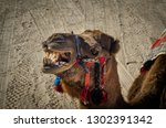 close up of the camel head.... | Shutterstock . vector #1302391342