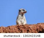Meerkat Against A Blue Sky.