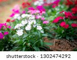 small red and pink flowers ... | Shutterstock . vector #1302474292