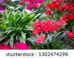 small red and pink flowers ... | Shutterstock . vector #1302474298