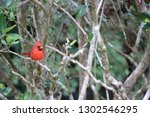 red male northern cardinal... | Shutterstock . vector #1302546295