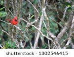 red male northern cardinal... | Shutterstock . vector #1302546415