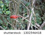 red male northern cardinal... | Shutterstock . vector #1302546418