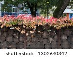 boston ivy on the gabion with... | Shutterstock . vector #1302640342
