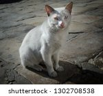 white stray cat with different... | Shutterstock . vector #1302708538