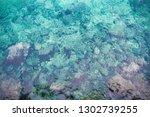 beautiful coral in sea blue...   Shutterstock . vector #1302739255