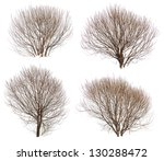 Leafless Bushes In Winter...