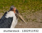 portrait of large wading bird... | Shutterstock . vector #1302911932