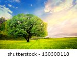 Colorful Hdr Landscape Tree In...