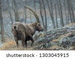 ibex mountain in rocky region ... | Shutterstock . vector #1303045915