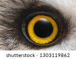 Stock photo owl s eye close up macro photo eye of the short eared owl asio flammeus 1303119862
