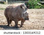 southern white rhinoceros ... | Shutterstock . vector #1303169212