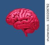 3d gloss red human brain... | Shutterstock . vector #1303208782
