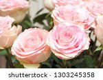 bouquet of pink roses close up. ...   Shutterstock . vector #1303245358