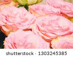the opened buds of pink roses...   Shutterstock . vector #1303245385