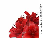 Red Lily On White Background