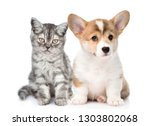 Stock photo corgi puppy with sad tabby kitten together isolated on white background 1303802068