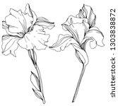 Vector Iris Floral Botanical...