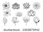 collection of lotus sketches.... | Shutterstock .eps vector #1303873942