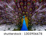 elegant peacock with colored... | Shutterstock . vector #1303906678