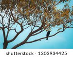 free black bird perched on a... | Shutterstock . vector #1303934425