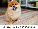 Portrait Of Fluffy Cute And...