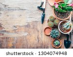 various cactus and succulent... | Shutterstock . vector #1304074948