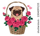 Stock vector cute pug dog sitting in a basket of roses vector cartoon illustration isolated on white pets love 1304099155