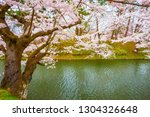 full bloom sakura   cherry... | Shutterstock . vector #1304326648