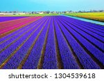 spring field of fragrant...   Shutterstock . vector #1304539618