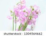 sweet pea flower | Shutterstock . vector #1304564662