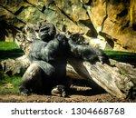 gorillas are ground dwelling ... | Shutterstock . vector #1304668768