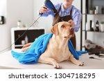 female groomer drying dog's... | Shutterstock . vector #1304718295