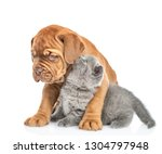 Stock photo kitten whispers a puppy in his ear secrets isolated on white background 1304797948