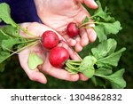 the hands of a young child are... | Shutterstock . vector #1304862832