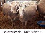 bjelovar  croatia   september ...   Shutterstock . vector #1304884948