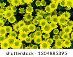 blurred soft images of yellow... | Shutterstock . vector #1304885395