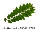 gooseberry leaves isolated on ... | Shutterstock . vector #1304912728