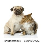 Stock photo cat and dog looking at camera isolated on white background 130492922