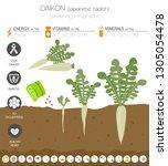 daikon beneficial features... | Shutterstock .eps vector #1305054478