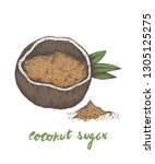 coconut sugar  coconut palm... | Shutterstock .eps vector #1305125275
