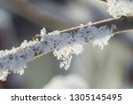 flora in winter with snowflakes ... | Shutterstock . vector #1305145495