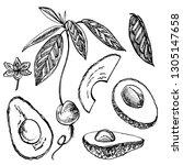 avocado set. vector hand drawn... | Shutterstock .eps vector #1305147658