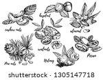 almonds  pecan  cashew nuts ... | Shutterstock .eps vector #1305147718